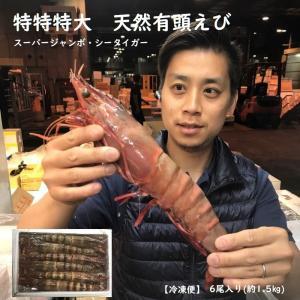特特特大天然有頭エビ 6尾  1.5kg  海老 エビ えび 天然 特大