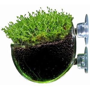 水中庭園 アクアリウム クリア ガラス ポッド 水槽 オブジェ 水草 レイアウト 熱帯魚(1個)|zebrand-shop