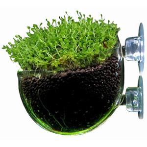 アクアリウム 水槽 水草 種(1個)