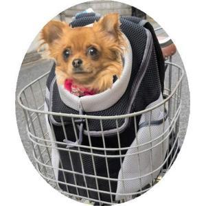 自転車 犬 猫 ペットキャリー キャリーバッグ リュック ペットリュック(BLACK) zebrand-shop