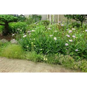 グリーンガーデン(Green Garden) フラワーガード 幅24×高さ46×奥行7.5cm 10本組 No.406-2 zembuzembu