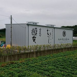 樽熟成 kowaka type T 25度 1800ml 丸西酒造  本格芋焼酎|zen8|07