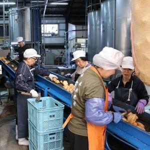 薩摩焼酎 三年古酒 相良十代目 25度 1800ml サツママサリ 相良酒造|zen8|05