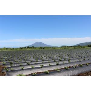 秋限定販売 八千代伝 熟柿 (じゅくし) 25度 1800ml 八千代伝酒造 薩摩焼酎|zen8|05