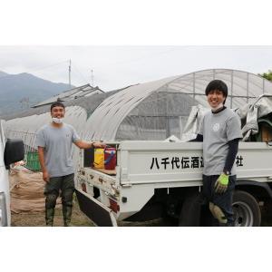 芋焼酎 秋季限定 八千代伝(黒)Harvester 収穫する者たち 25度 1800ml 八千代伝酒造 zen8 02