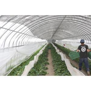 芋焼酎 秋季限定 八千代伝(黒)Harvester 収穫する者たち 25度 1800ml 八千代伝酒造 zen8 05