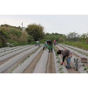 芋焼酎 秋季限定 八千代伝(黒)Harvester 収穫する者たち 25度 1800ml 八千代伝酒造 zen8 06