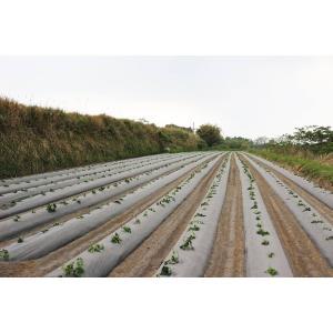 芋焼酎 秋季限定 八千代伝(黒)Harvester 収穫する者たち 25度 1800ml 八千代伝酒造 zen8 07