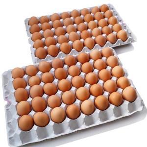 黄身の色と濃厚度合いがハンパない卵  業務用 いきいきたまご(80個) 送料込み|zeppinchibahonpo|05