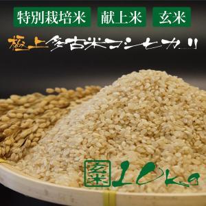 令和2年産 新米 産地直送 プロも認める 萩原農場 の 特別栽培米 多古米 コシヒカリ 【玄米】 10kg|zeppinchibahonpo