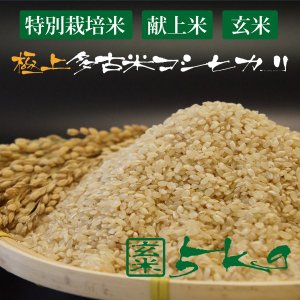 令和2年産 新米 産地直送 市場に出回りにくい 萩原農場 の 特別栽培米 多古米 コシヒカリ 【玄米】 5kg|zeppinchibahonpo