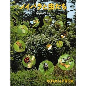 ノイバラと虫たち (たくさんのふしぎ傑作集) 中古 古本