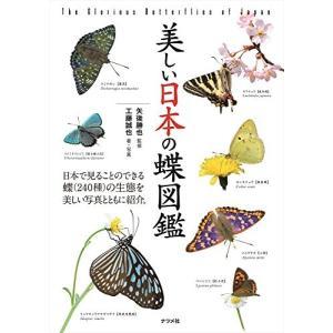 美しい日本の蝶図鑑 中古 古本