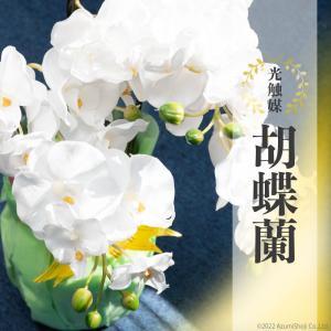 胡蝶蘭 光触媒 花 脱臭 消臭効果あり 枯れない 造花 ピンク ホワイト イエロー プレゼント 3本立て 全3色 母の日|zumi
