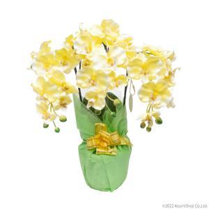 胡蝶蘭 光触媒 脱臭 消臭効果あり 枯れない 造花 イエロー 黄色 3本立て お祝い プレゼントに|zumi