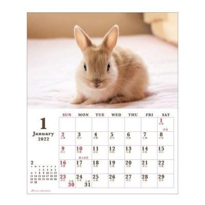 カレンダー 2022年 Sweet Rabbit うさぎ 卓上 スケジュール 動物写真 書き込み インテリア