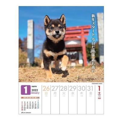 卓上 だってシバだもの 2022 カレンダー いぬ 週めくり スケジュール 令和4年暦