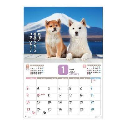 カレンダー 2022年 だってシバだもの 壁掛け スケジュール いぬ アクティブコーポレーション 柴犬 写真