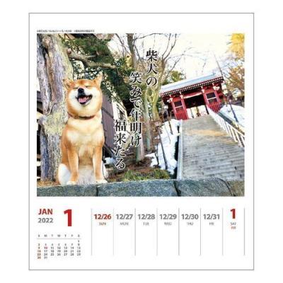 カレンダー 2022年 犬川柳 週めくり 壁掛け 卓上 柴犬 スケジュール かわいい 動物 写真