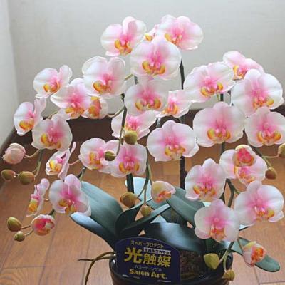 光触媒 胡蝶蘭 3本立て ミディ淡いピンク 【造花】