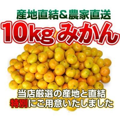 みかん、柑橘類