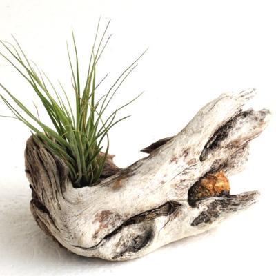 白色系流木花器