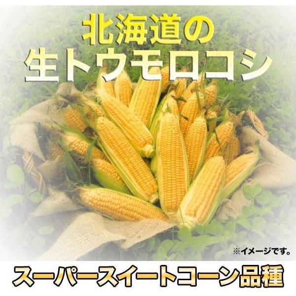 北海道産 冷凍 ホールコーン 業務用1kg|2983|02