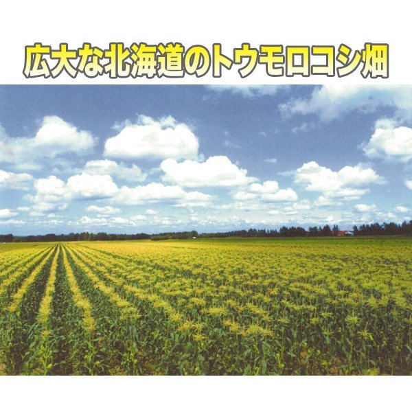北海道産 冷凍 ホールコーン 業務用1kg|2983|03