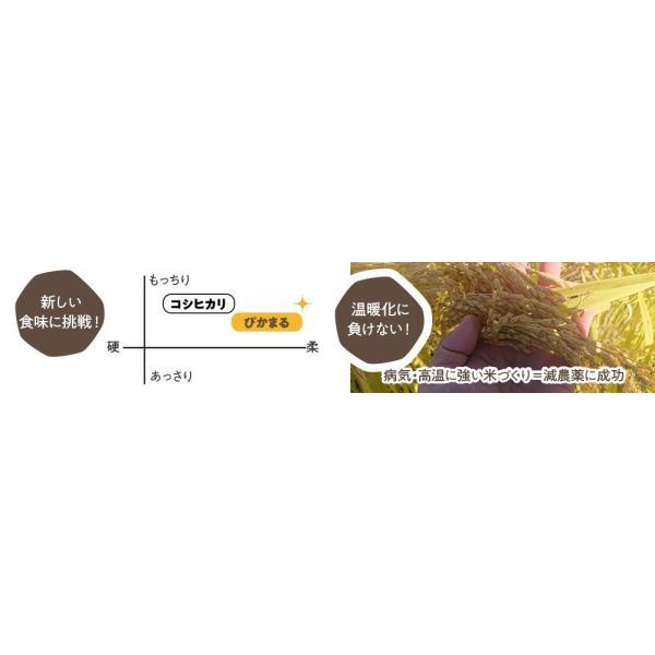 南魚沼産ぴかまる精米10kg(5kg×2)【令和2年度】粘りと輝きが特徴です 5602miwa 03