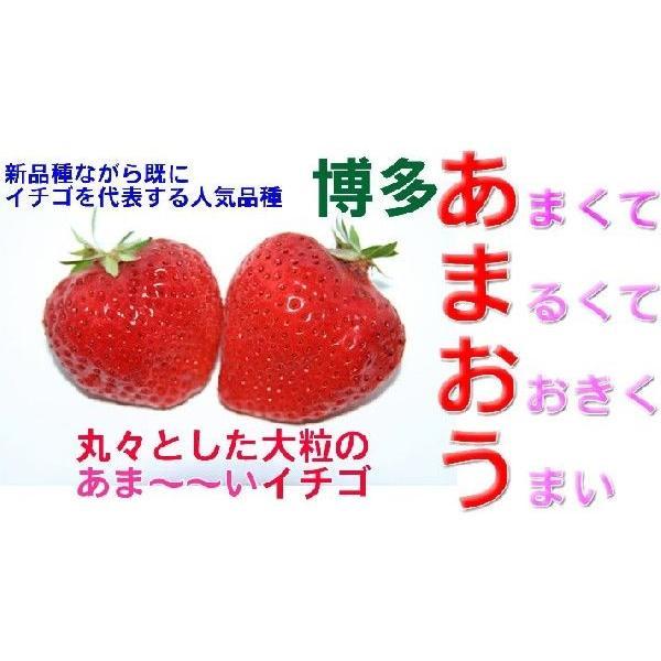 【2021年12月出荷】福岡産 あまおう 苺 デラックスパック 2パック いちご イチゴ S10