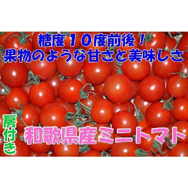 2022年分予約 全額返金保証 甘い 808 ミニトマト 1.5kg 房付き プチトマト フルーツトマト 和歌山産 SSS 6t