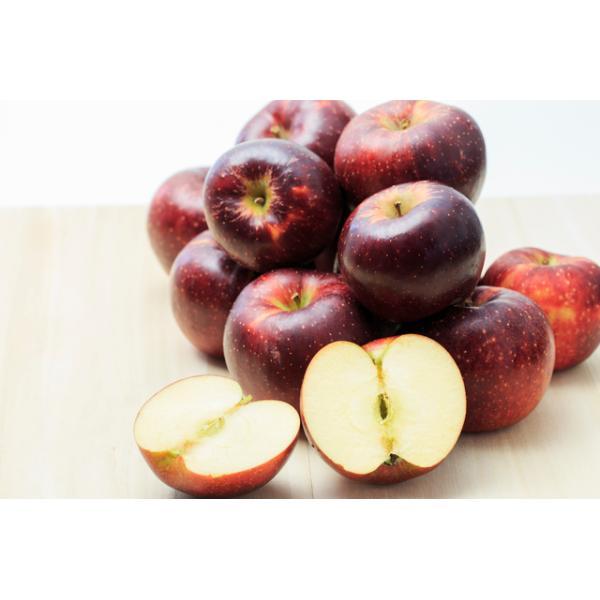 減農薬 長野 秋映 りんご B品 約4.5kg 12〜25個入 秋映え リンゴ 林檎 産地直送 小山 SSS 10t