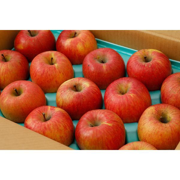 【2021年12月出荷】減農薬 サンふじ りんご B品 約9kg 24〜46個入 長野 リンゴ 林檎 さんふじ サンフジ 小山