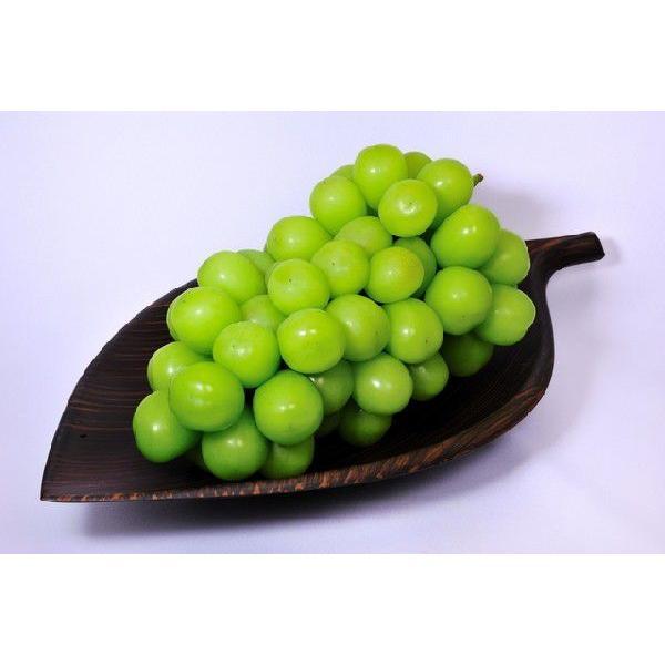 【2021年10月出荷】低農薬 訳あり シャインマスカット ぶどう 1.2kg 小粒3〜4房入 葡萄 ブドウ 長野 産地直送