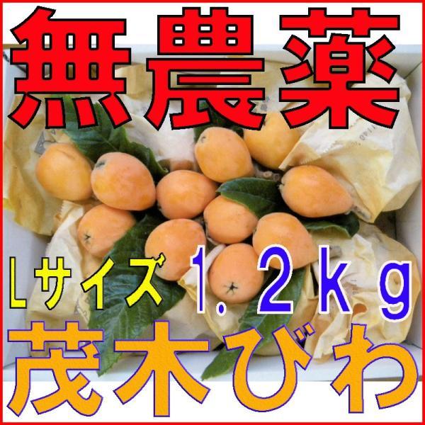 2022年分予約 長崎産 無農薬 びわ 茂木びわ Lサイズ 1.2kg 25玉前後 びわの葉入り 産地直送 SSS
