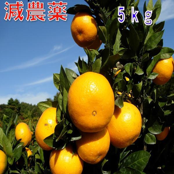 和歌山産 減農薬 みかん 約5kg 2S〜Lサイズ混合 ミカン 蜜柑 産地直送 SSS 10t 12t