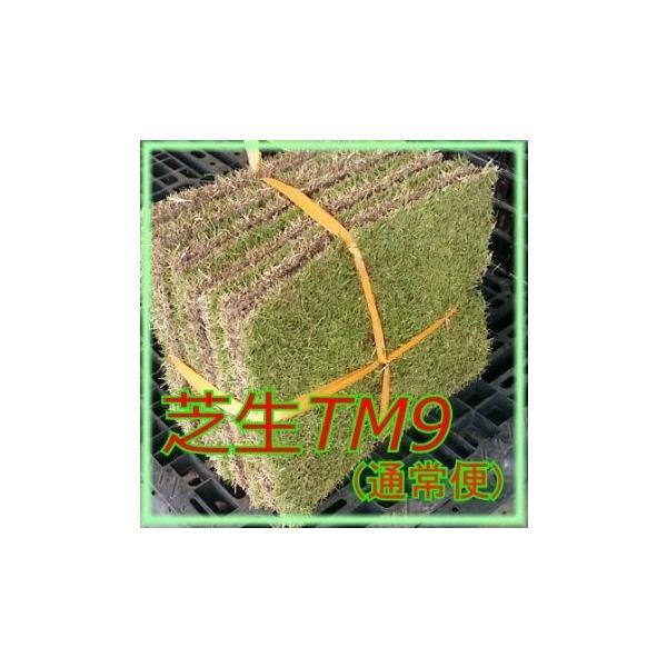 芝生 ティーエムナイン (高麗芝系) TM9 1平米  |8hana-gift