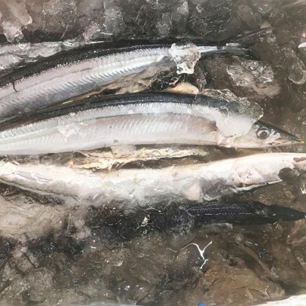 釧路 笹谷商店 業務用 冷凍 生さんま 10kg 秋刀魚 サンマの街 くしろより【凍】