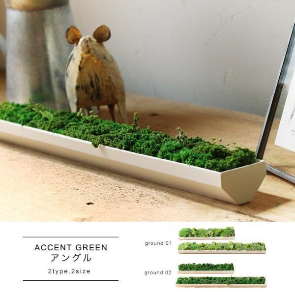 ACCENT GREEN アングル S ちょっとした隙間に置けるプリザーブドグリーン|a-depeche