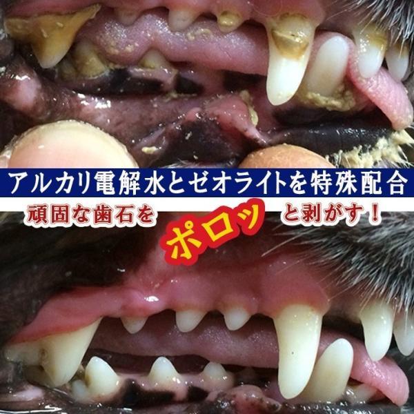マジックゼオ・プロ 犬 黄ばみ 歯周病予防 すすぎ不要|abcdogshop|15