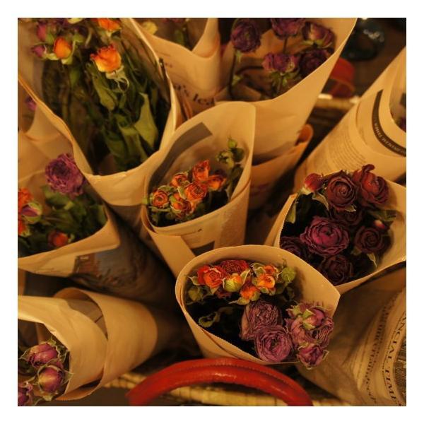 TOPANGA DRY FLOWER ROSE ¥500|abracadabra