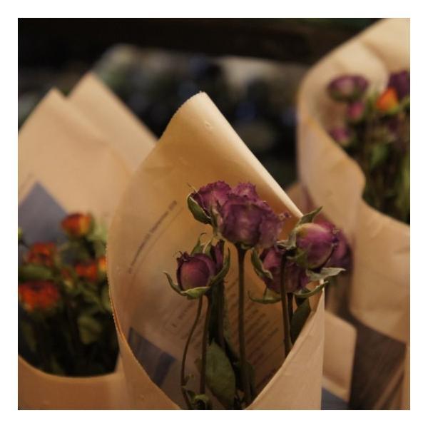 TOPANGA DRY FLOWER ROSE ¥500|abracadabra|06