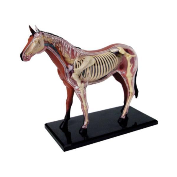 立体パズル 4D VISION 動物解剖 No.04 馬解剖モデル