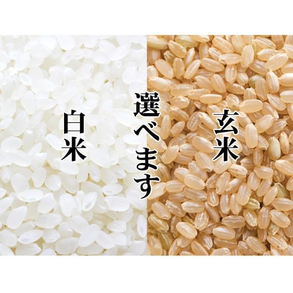 米 10kg 送料無料 白米 または 玄米 あきたこまち 5kg×2袋 秋田県産 令和元年産 1等米 お米 10キロ 食品 北海道・沖縄は追加送料|adachinet-umai|02