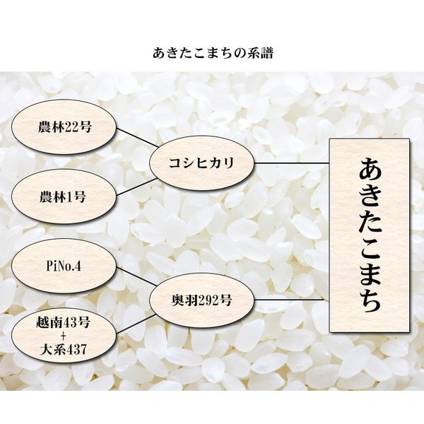 米 10kg 送料無料 白米 または 玄米 あきたこまち 5kg×2袋 秋田県産 令和元年産 1等米 お米 10キロ 食品 北海道・沖縄は追加送料|adachinet-umai|06