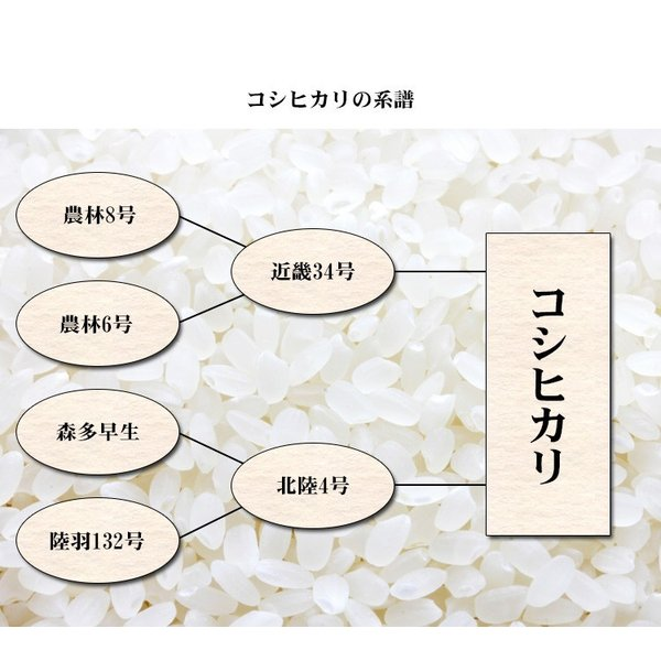 米 10kg 送料無料 白米 コシヒカリ 5kg×2袋 福島県産 30年産 1等米 お米 10キロ 食品 ふくしまプライド。体感キャンペーン(お米)|adachinet-umai|06