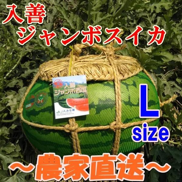 入善ジャンボスイカ L(11〜13キロ)  贈答用  / 果物 ギフト スイカ 西瓜 農家直送|agri-takimoto