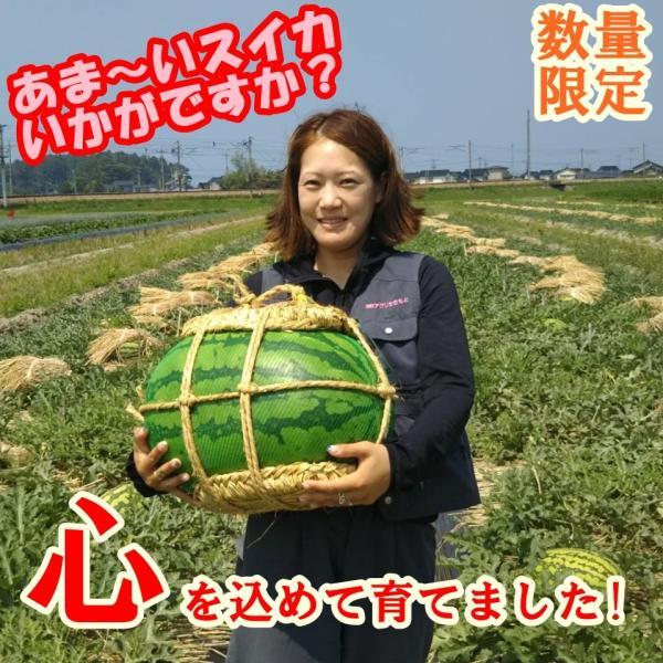 入善ジャンボスイカ L(11〜13キロ)  贈答用  / 果物 ギフト スイカ 西瓜 農家直送|agri-takimoto|04