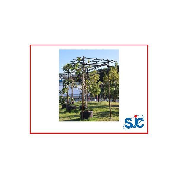 積水樹脂  セキスイ フルーツパーゴラ L 幅1.2×高さ2.0×奥行2.4m (代引不可) 果樹棚 ぶどう キウイ ひょうたん ヘチマ 藤
