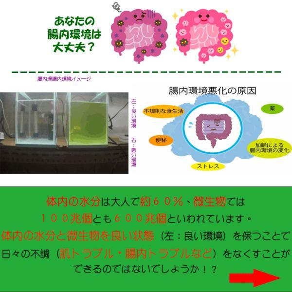 バクチャー 活性エキス ※他商品同梱不可(こちらの商品はオーナー様用です。)|aicarrot|05